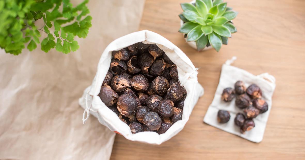 Co jsou to mýdlové ořechy?