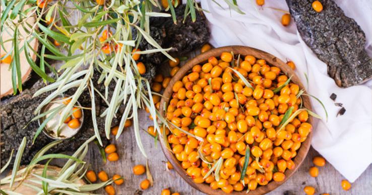 Oranžový poklad jménem Rakytník