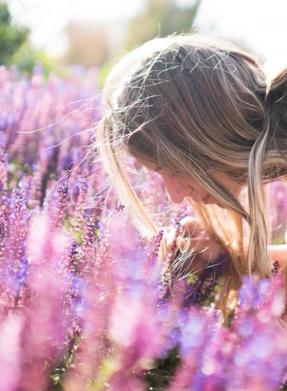 Léčivé účinky levandule.Využití levandule v kosmetice i zdravotnictví