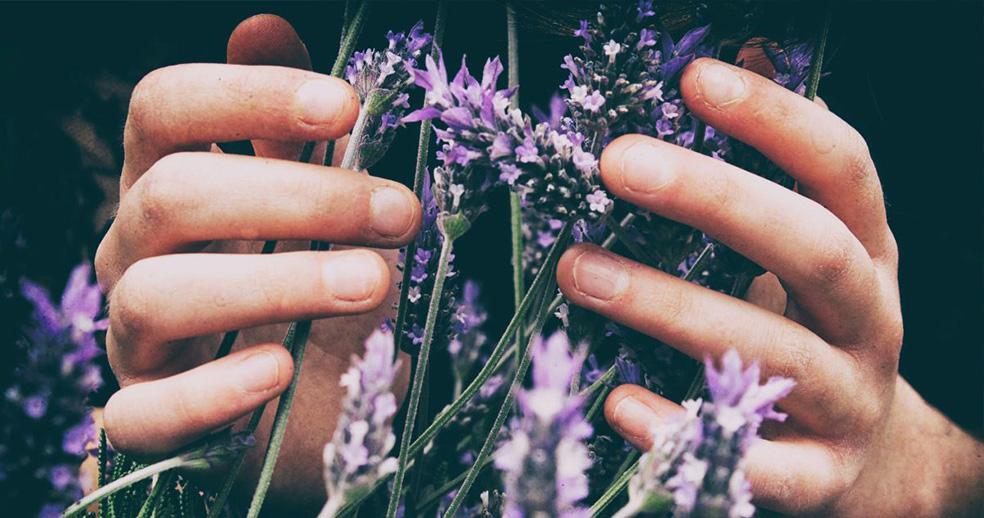 Levandule, léčivý dotek přírody pro duši i tělo