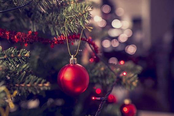 Ekologické Vánoce. Živý nebo umělý vánoční stromek?