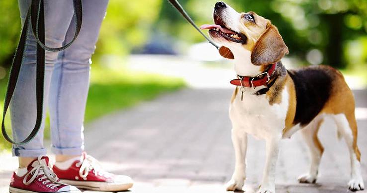 Domácí repelent nejen pro psího parťáka
